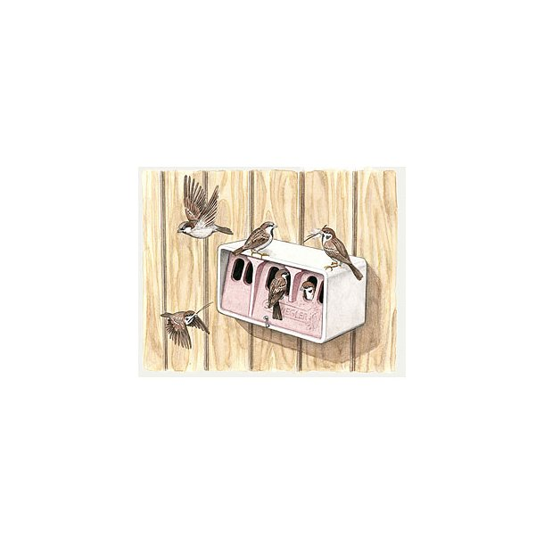 Gråspurvekoloni, gråspurvehus